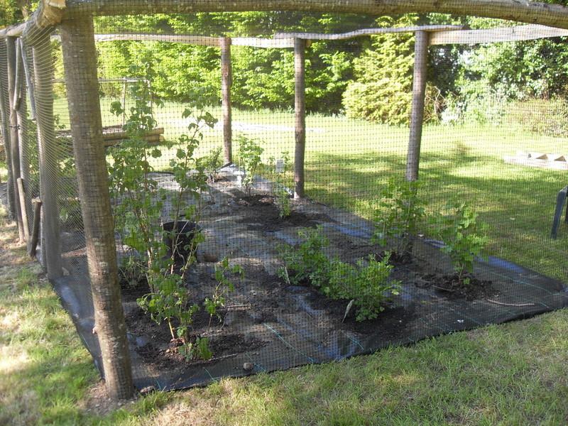 Sweet chestnut fruit cage by Charlotte Love Garden Design